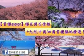 櫻花開花情報+九州/中國/四國賞櫻勝地精選!