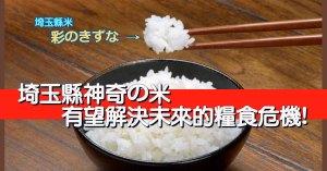 埼玉縣米-saitama