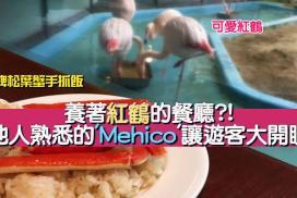 養著紅鶴的餐廳?! 當地人熟悉的'Mehico'讓遊客大開眼界