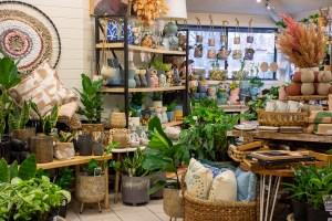 Indoor Plants at Bliss Garden Giftware Pialligo
