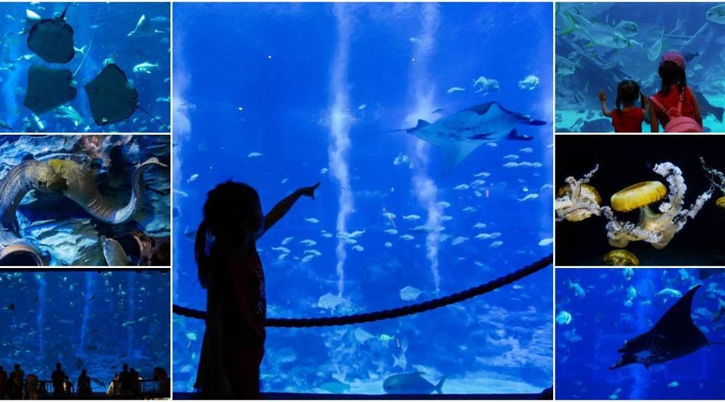 b&L family, Bella, Bljourney, ,Family, pantip, Review, The Journey of B&L Family, Travel, กระเตงลูกเที่ยว , เลี้ยงลูกนอกบ้าน, แม่และเด็ก , pantip ,พาลูกเที่ยว , S.E.A. , S.E.A. Aquarium , Aquarium , Singapore , ดูปลา , สิงคโปร์ , sentosa , resort world sentosa , ครอบครัว , ที่พัก , พาลูกเที่ยวดะ , พาลูกเที่ยว , เลี้ยงลูกนอกบ้าน ,กระเตงลูกเที่ยว , klook , uss , universal studio , Singapore , ticket, sea wheel , , ยูนิเวอร์แซล สตูดิโอ , สิงคโปร์ , เที่ยวสิงคโปร์ , taxi สิงคโปร์ , การเดินทาง , เครื่องเล่น , สวนสนุก , klook ดีมั้ย , klook Thailand , klookth , ตั๋วลดราคา , บัตรสวนสนุก , ส่วนลด , ถูก , ซื้อตั๋วที่ไหน , รีวิว , Luge Car , Maritime Experiential Museum , พิพิธภัณฑ์ , พิพิธภัณฑ์สัตว์น้ำ