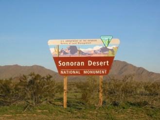 Risultati immagini per sonora desert national monument