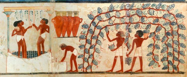 vino antico egitto
