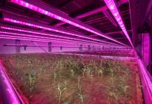 Vertical farming research facility opens in Selby