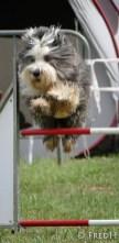agility-dog-cormery-10