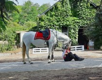 spectacle-equestre-abbatiale-03