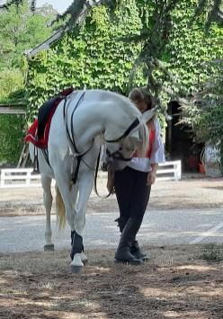 spectacle-equestre-abbatiale-06