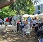 spectacle-equestre-abbatiale-11