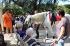 spectacle-equestre-abbatiale-15