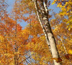 l'automne, une période clé pour la pêche de la carpe