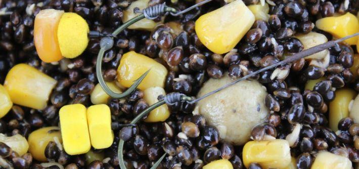 les graines pour la carpe