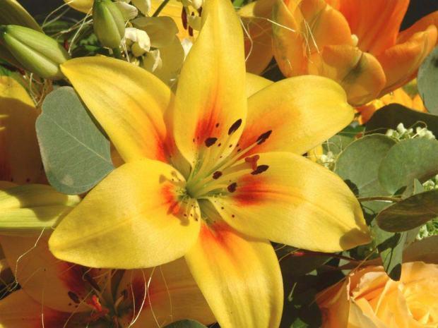 flores-lirios