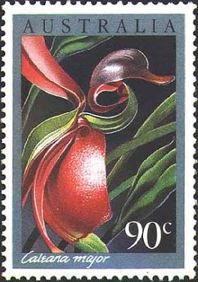 flor-orquidea-pato-voador-33