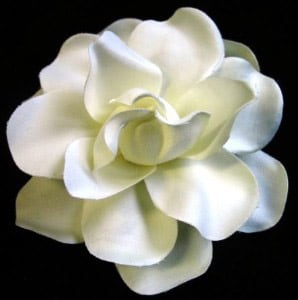 gardenia-foto.-78