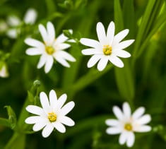 stock-photo-83065113-white-springtime-flowers