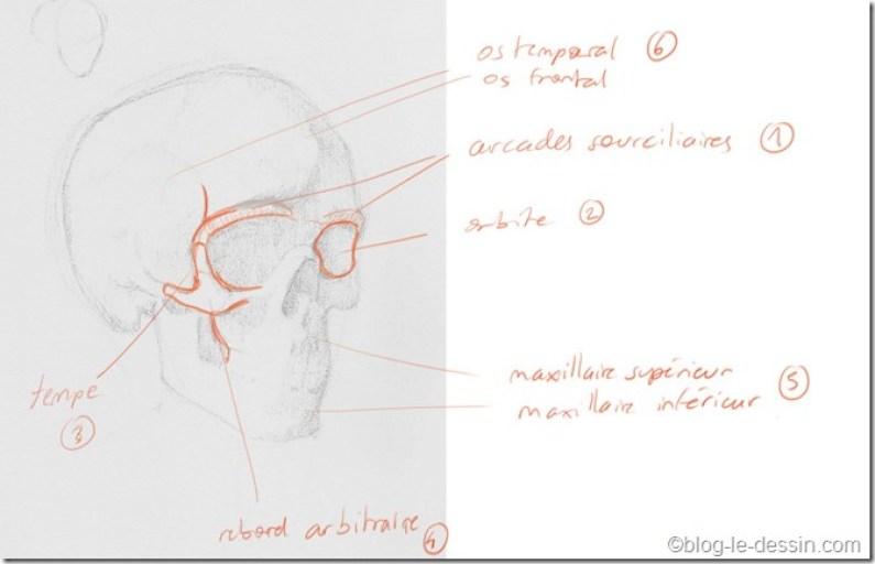 dessin squelette visage