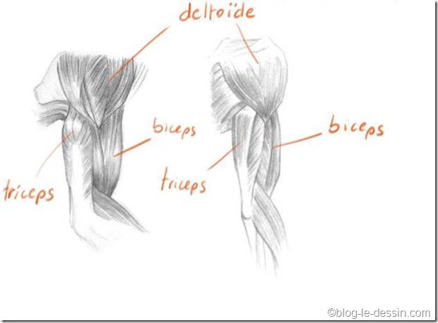 planche-dessin-bras.jpg