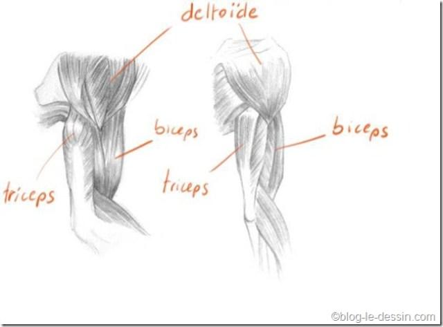 planche dessin bras