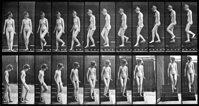 Une photographie de Muybridge, très utilise pour comprendre le mouvement d'un personnage
