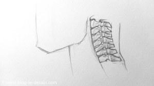 comment dessiner un cou septieme vertebre