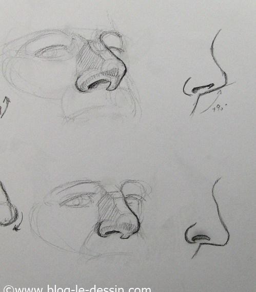 illustration dessin nez retrousse et nez normal dans portrait de profil