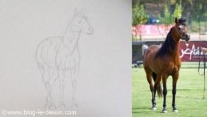 planche esquisse dessin cheval structure