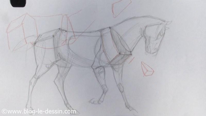 proportions simplifiées pour représenter le cheval en posture debout
