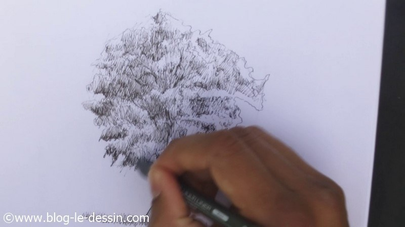 illustration dessiner arbre final