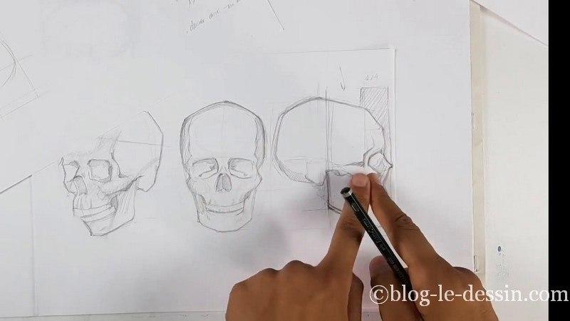 Dessiner le squelette du crâne illustration 1 avec mesure et retouche