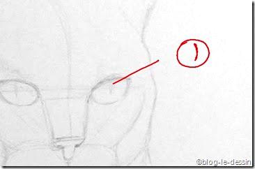 dessiner l'oeil d'un chat