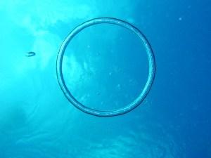 Bubble Rings : L'art des dauphins