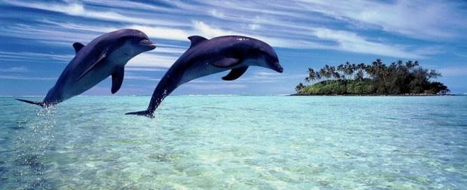 Une association 100% dédiée aux dauphins et delphinidés