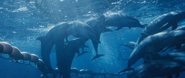Pourquoi les dauphins ne sautent-ils pas au-dessus des filets ?