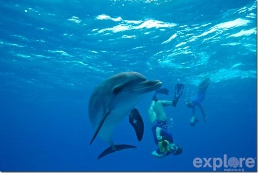 La scientifique Denise Herzing du Wild Dolphin Project avec un dauphin tacheté des Bahamas