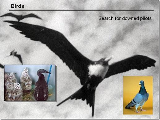 Navy Dolphins - Bio Oiseaux