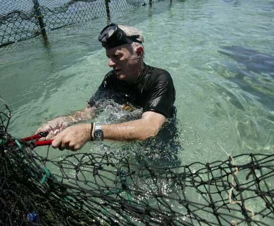 Ric O'Barry libérant des dauphins