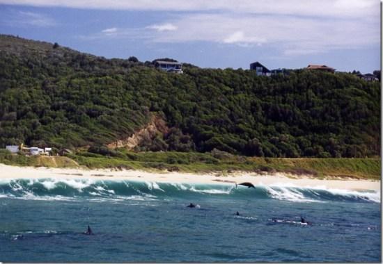 duncansapien - dauphins à Plettenburg Bay, Afrique du Sud