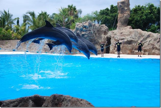 mavur - Dauphins captifs dans un delphinarium