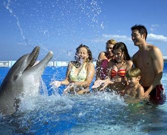 La nage avec les dauphins est devenue une véritable industrie, par exemple ici au Dolphin Conservation Center