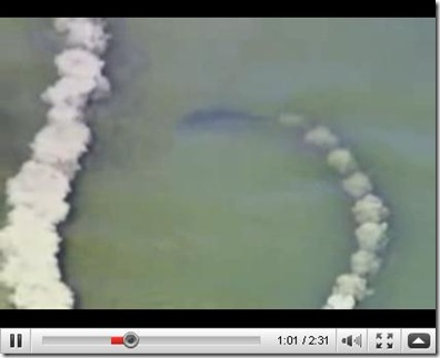 BBC One Life - Technique de chasse des dauphins (écran de boue) en Floride