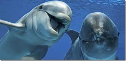 Les scientifiques affirment que les dauphins devraient être traités comme des 'personnes non-humaines' - Photo du TimesOnline