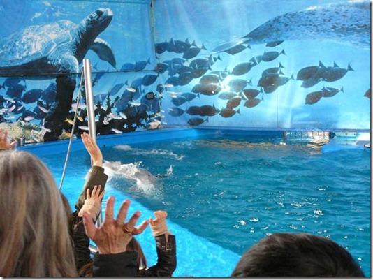 Ce sont toujours les mêmes pitreries qu'on trouve dans les delphinariums...