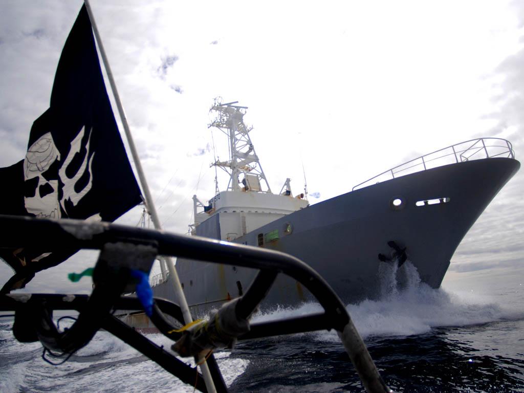 Sea Shepherd fait décidément de l'excellent travail pour protéger les cétacés !