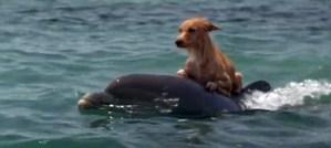 Un chien sauvé par des dauphins