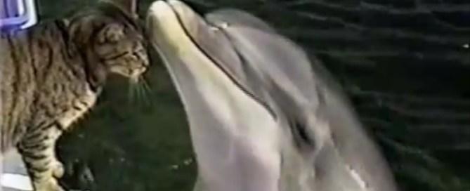 Copains comme chat et dauphin !