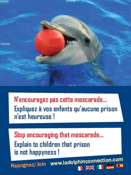Le tract de l'Opération pour les dauphins d'Antibes