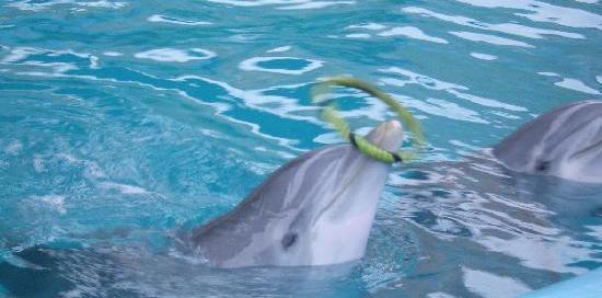 Pérou : les dauphins de l'hôtel Los Delfines à Lima