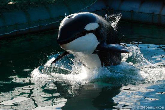 orque-russe-nakhoda