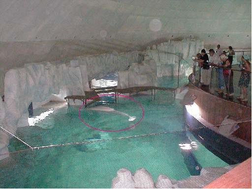 belugas-valences