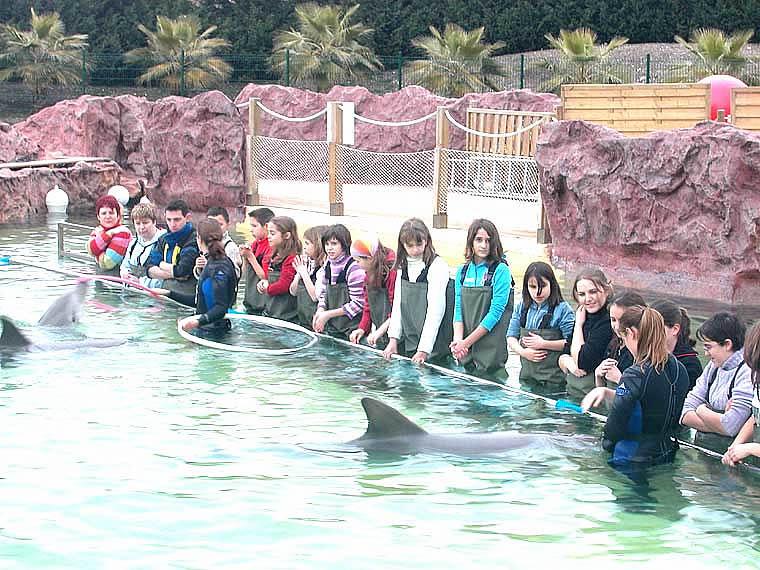 Rencontrer les dauphins avec les soigneurs   Marineland Parcs